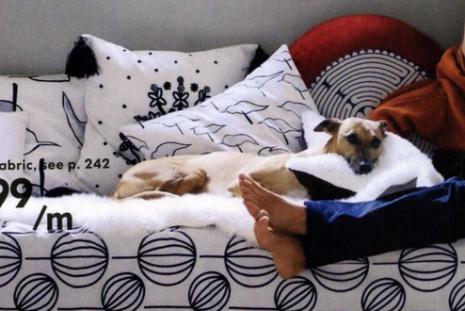 El perro de Ikea